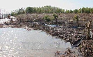 Điểm nóng - Đề nghị kiểm điểm Chủ tịch xã Rạch Chèo về vụ phá rừng để nuôi sò huyết tại Cà Mau