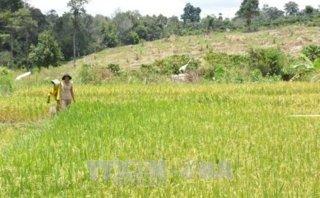 Điểm nóng - Đắk Lắk: Rừng, đất rừng vẫn bị chặt phá, lấn chiếm trái phép