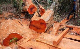 Điểm nóng - Rừng bị phá tanh bành tại nơi được canh gác rất cẩn mật
