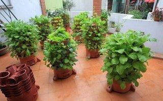 Cuộc sống xanh - Độc đáo tháp rau sạch hữu cơ cho người Hà Nội