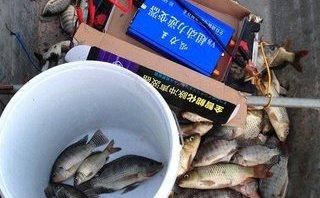 """Hồ sơ điều tra - Sôi động thị trường """"máy diệt cá"""" online"""