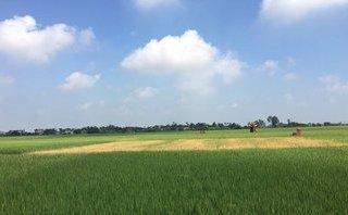 Pháp luật - Kẻ xấu phun thuốc trừ cỏ, hàng chục sào lúa của nông dân mất trắng