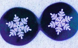 Cộng đồng mạng - Chuyện về những bông tuyết 'song sinh'