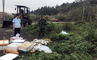 An ninh - Hình sự - Quảng Ninh: Kịp thời ngăn chặn vụ buôn lậu cá không có nguồn gốc hợp pháp