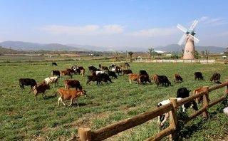 Xã hội - Sức hấp dẫn tại trang trại bò sữa organic tiêu chuẩn châu Âu