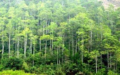 Cuộc sống xanh - Infographic: Hiện trạng rừng Việt Nam