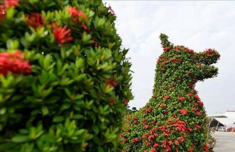 Dân sinh - Chiêm ngưỡng cặp cây cảnh hoa mẫu đơn hình linh vật năm Mậu Tuất