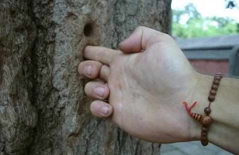 Xã hội - Cao thủ Nhất dương chỉ và ý niệm sống đầy nhân văn qua… một ngón tay