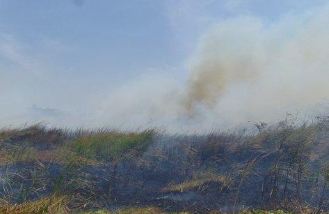 """Tin nhanh - Bạc Liêu: Cháy lớn tại bãi đất trống, ngọn lửa """"uy hiếp"""" khu dân cư"""