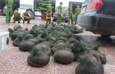 Giáo dục - Hưng Yên: Bắt giữ vụ vận chuyển 112 cá thể tê tê
