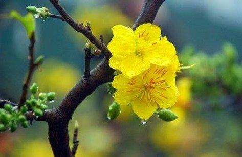 Tin nhanh - Thời tiết mùng 3 Tết: Nam Bộ có mưa rào vài nơi