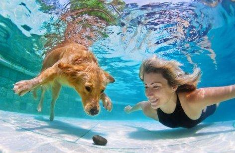 Tiêu điểm - Loài người sẽ có thể sống dưới nước?