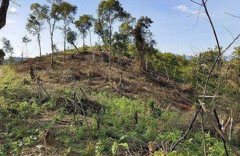 Điểm nóng - Xử phạt 100 triệu đồng doanh nghiệp phá rừng đặc dụng Mường Phăng