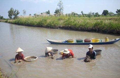 Điểm nóng - Kiên Giang: Tái diễn nạn khai thác các bãi nuôi sò trái phép