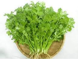 Sức khỏe - Những lợi ích tuyệt vời của rau mùi