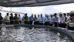 Môi trường - Thủ tướng Nguyễn Xuân Phúc đề nghị Formosa khẩn trương chuyển sang dập cốc khô