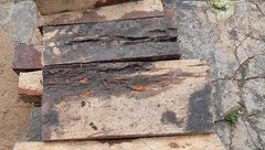 Hồ sơ điều tra - PV báo Người Đưa Tin xuyên đêm mật phục, thâm nhập cung đường gỗ lậu