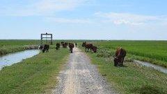 Dân sinh - Quảng Bình: Phải chấm dứt việc thu phí đồng cỏ chăn nuôi