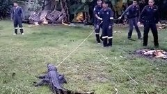 Cộng đồng mạng - Video: Cuộc vây bắt cá sấu khổng lồ ở Thái Lan