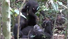 Cộng đồng mạng - Video: Mẹ con tinh tinh say mê với trò chơi lái máy bay