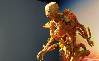 Văn hoá - Triển lãm cơ thể người tại TP.HCM bị yêu cầu tạm dừng