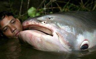 Dân sinh - 'Thủy quái' Vàm Nao và giai thoại thú vị về cá sấu 5 chân thành tinh