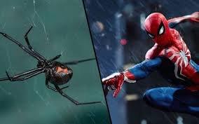 Muốn trở thành Người Nhện, ba anh em để nhện độc cắn