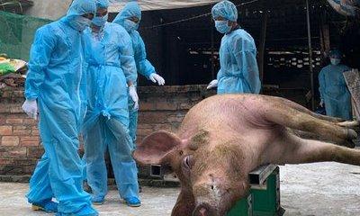 Dân sinh - Hà Nội: Trên 60% lượng thịt lợn ra thị trường được kiểm soát