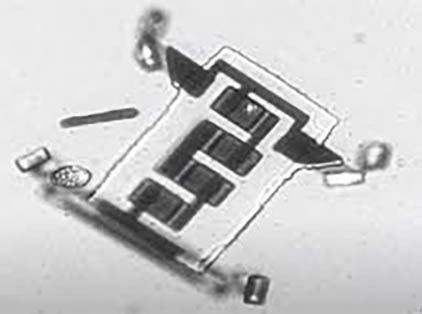 Clip: Cận cảnh chú robot siêu nhỏ có thể chui vào cơ thể người